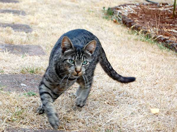 actioncat
